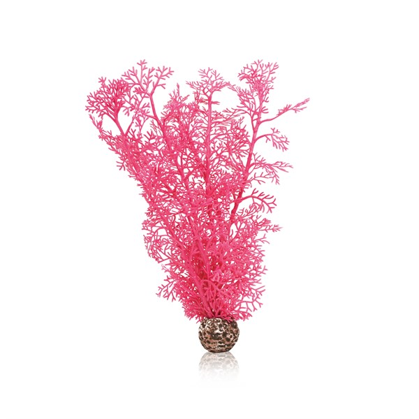 Photo de Corail moyen rose Biorb